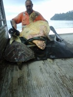 sauvetage des tortues en mer